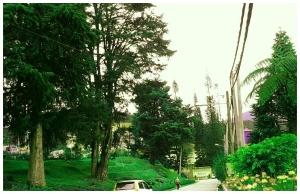 Antara panorama Cameron Highland itu