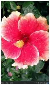 Bunga merdeka raya,,