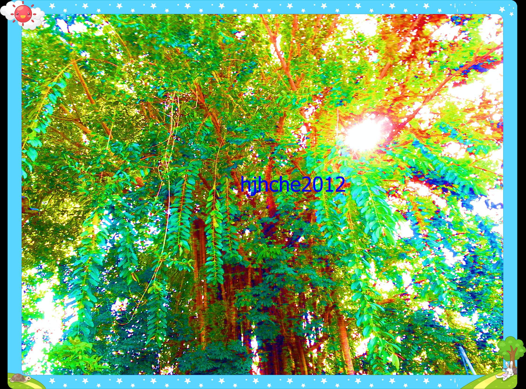 pohon rimba kesanmekap