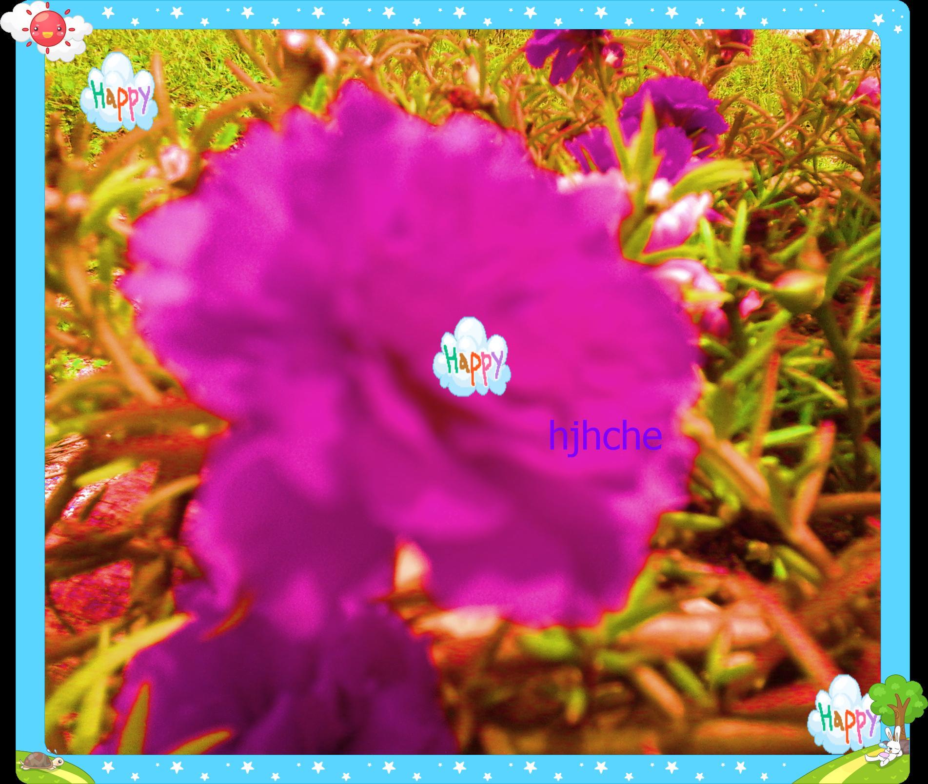 bunga kembang mekar
