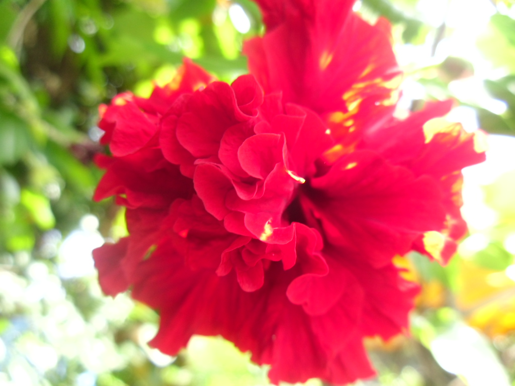 saat bunga kembang mekaritu