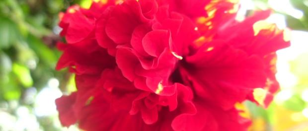 ketika kematian itu,,bunga terus kembang mekar di pohon itu